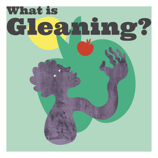 Click here to find out more about Gleaning from Feedback Global, who established The Gleaning Network in 2012.