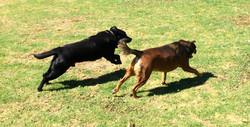 Roger & Charlie running in the Park!