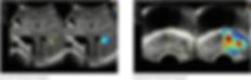 Screen Shot 2020-03-23 at 12.03.19.png