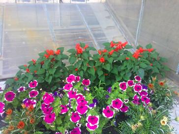 наши цветы