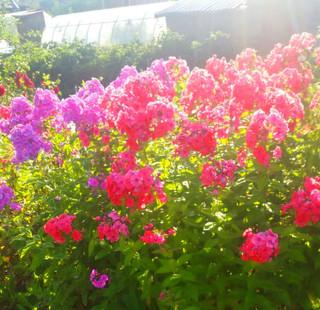 Olimp_foto_02_005.jpeg
