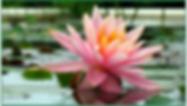 Screen Shot 2020-05-19 at 4.47.11 PM.png
