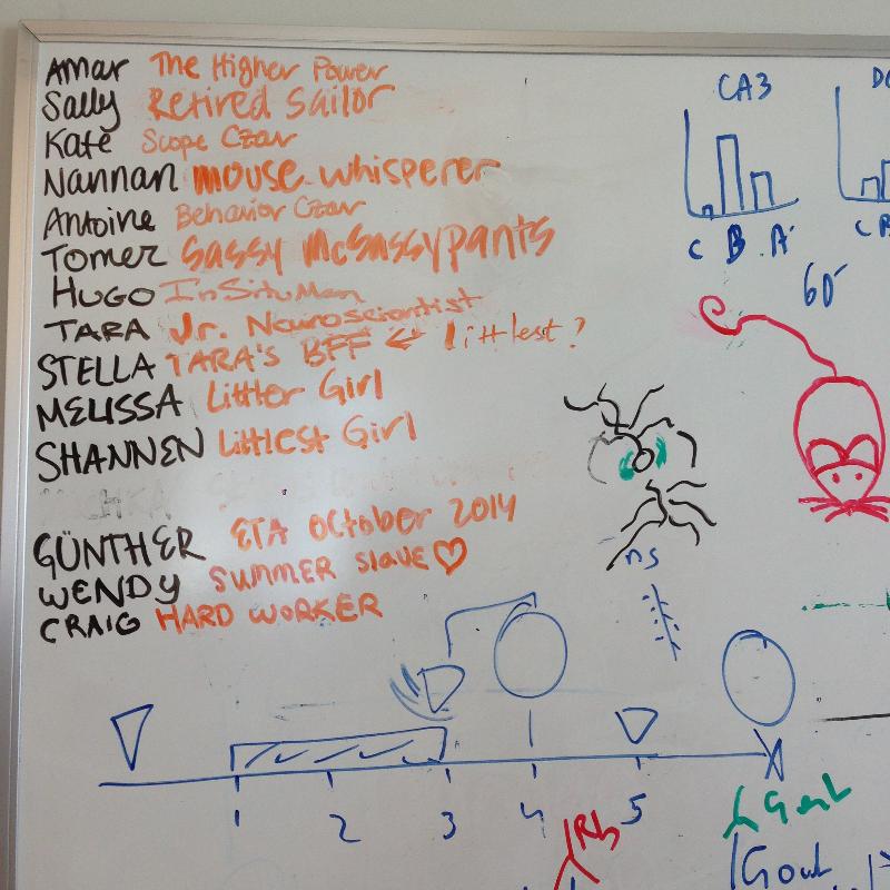 Lab board graffiti.JPG