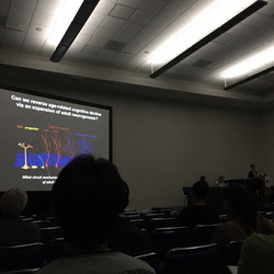 Kate speaking at SFN 2016