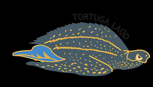 Tortuga%20Lau%CC%81d_edited.png