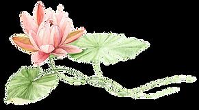 lotus%20bought%20pic_edited.png