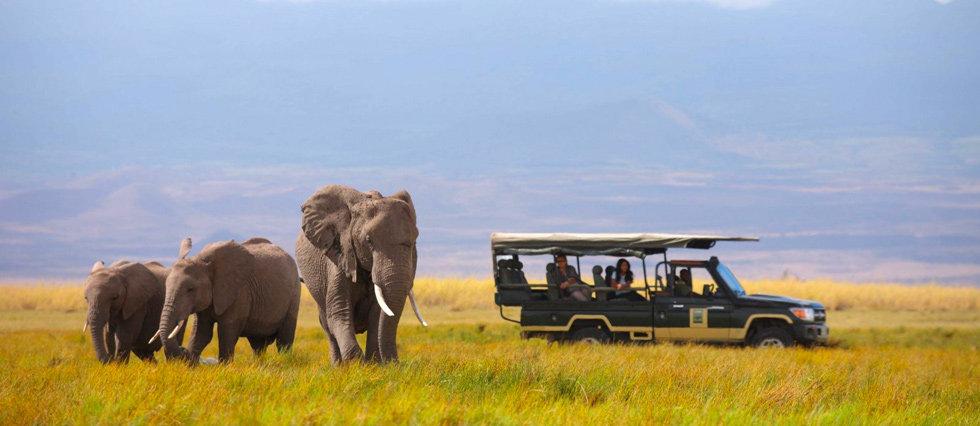 01-elephants-and-truck-980.jpg