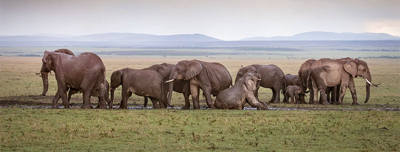 08-elephants-800.jpg