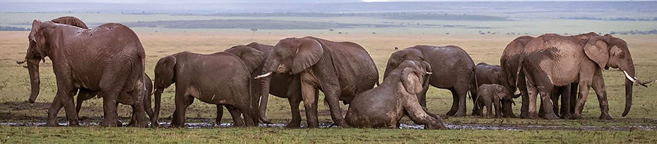 05-row-of-elephants-980.jpg