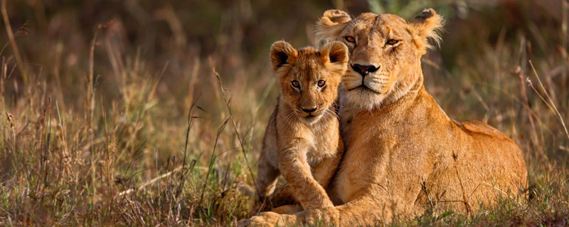 15-lioness-and-cub-800.jpg