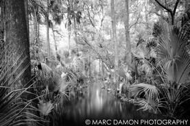 Fisheating Creek #2 - 2013