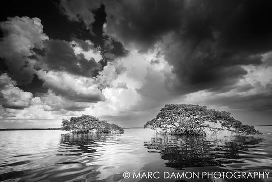 Ten Thousand Island #2 - 2015