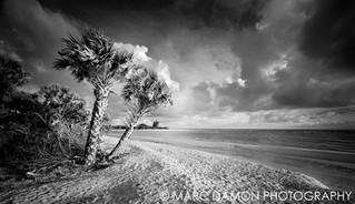 Barefoot Beach - 2014
