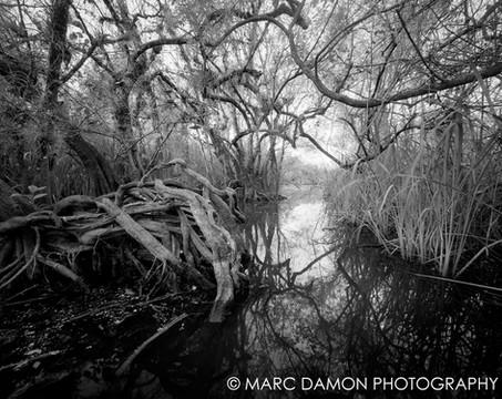 Turner River #1 - 2009