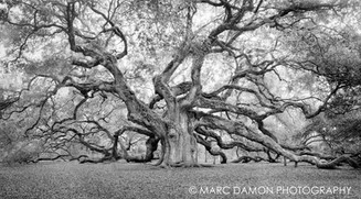 Angel Oak - 2019