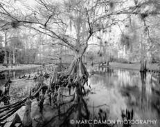 Fisheating Creek #4 - 2014