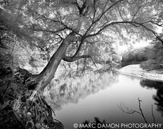 Swuannee River #1 - 2008