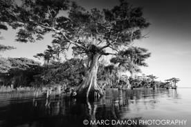 Blue Cypress Lake - 2012