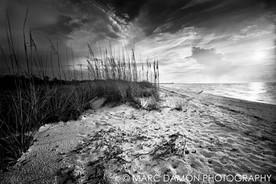 Big Hickory Island #2 - 2014