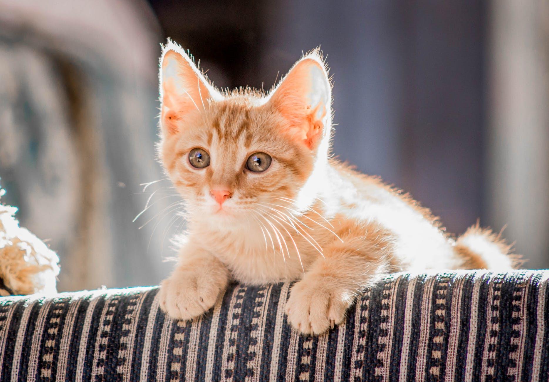 Pet or Companion Animal Reading