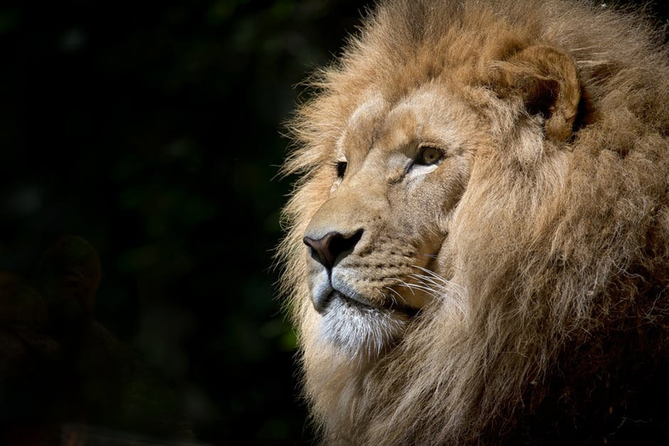 Spirit & Power Animal Reading - Adult
