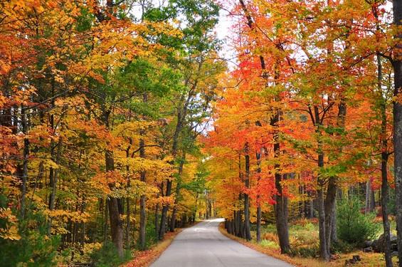 Pomfret fall foliage
