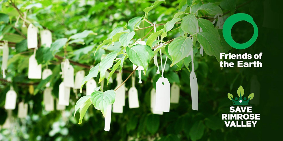Friends of the Earth CEO visit & 'Wish Tree' event