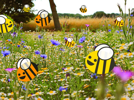 Bees, Blooms and Butterflies
