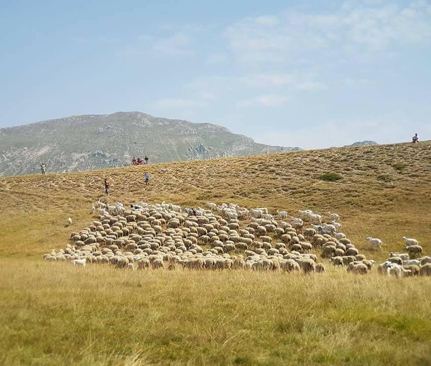 2 - schapen en herders 1