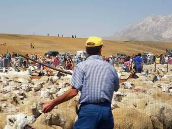 Deel 2 Feuilleton Edward Lear - Over schapen, herders en de transumanza