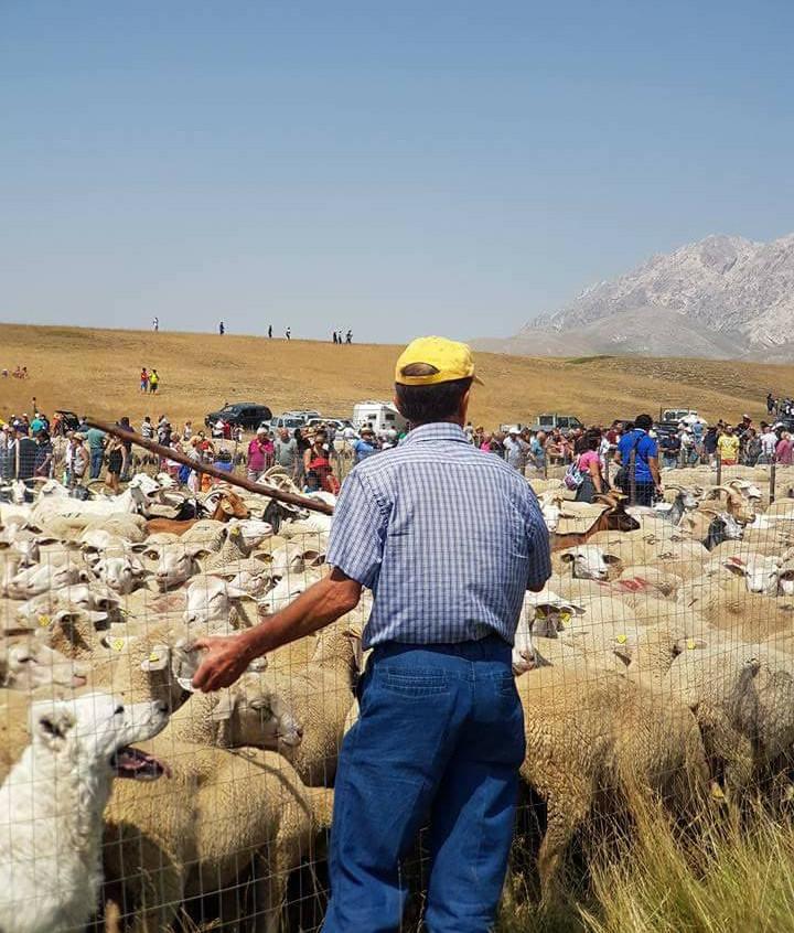 2 - schapen en herders 2