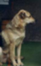 Benny Dog