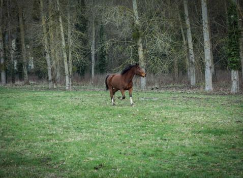Les chevaux de course et l'évangélisation