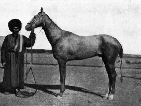 Alexandre Klimouk: Un peu d'histoire de l'élevage akhal-téké