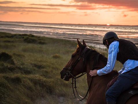 Ismaïl Kadaré: Si le cheval pouvait témoigner...