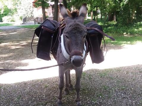 S. Jean Chrysostome sur la vraie valeur du cheval, de l'âne... et de l'homme