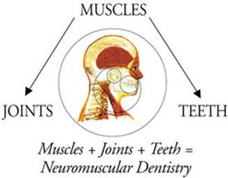 Joints Muscles Teeth.jpg