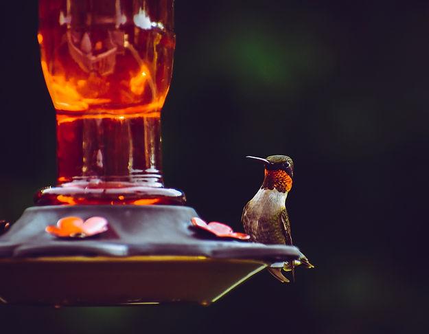 hummingbird_feeder.jpg