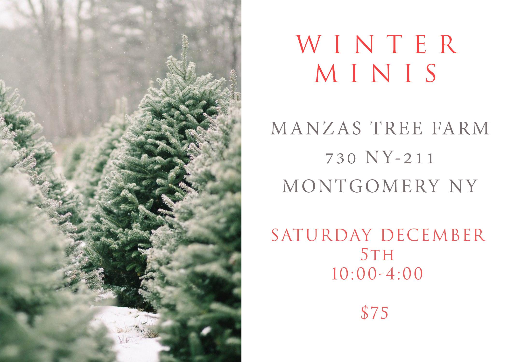Tree Farm Winter Mini Sessions