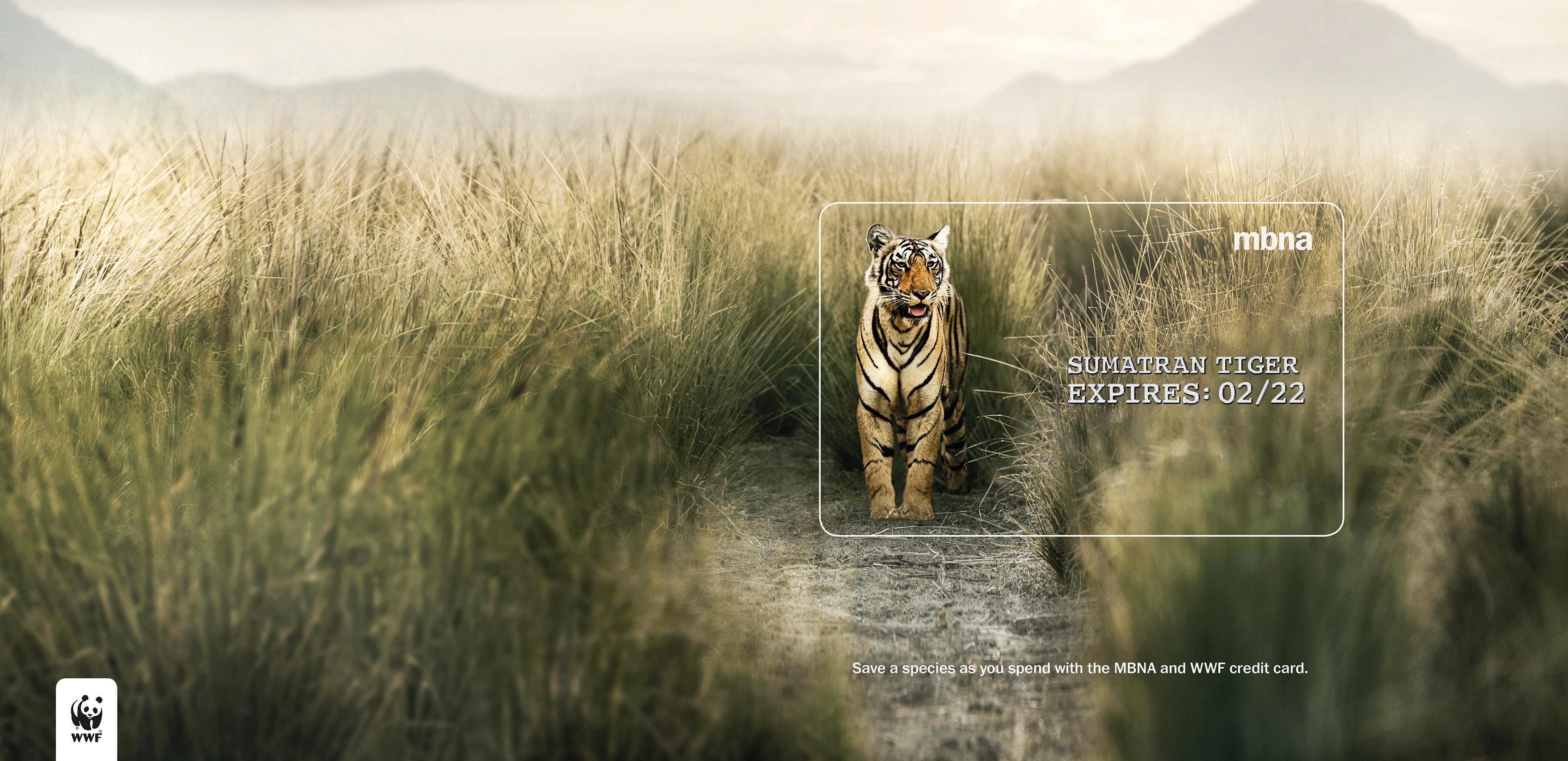 MBNA_EXPIRES_AWARDS TIGER_FOR WEB
