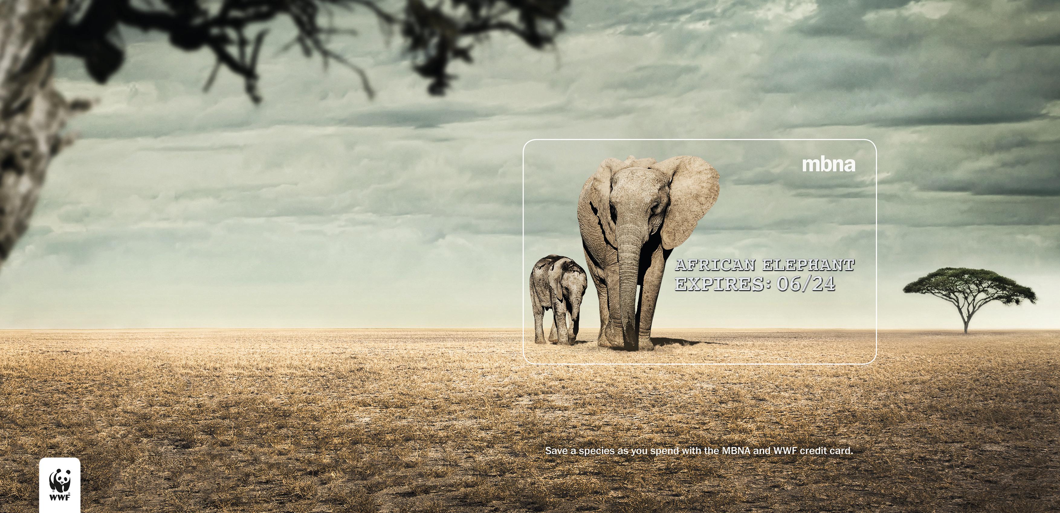 MBNA_EXPIRES_AWARDS ELEPHANT_FOR WEB