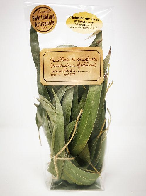 Feuilles entières Eucalyptus