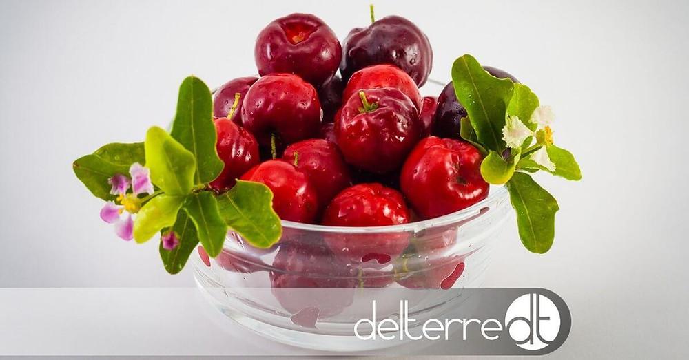 Acerola – Vitamina C e Sistema Imunitário