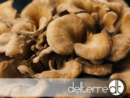 Maitake – Propriedades e Benefícios Terapêuticos