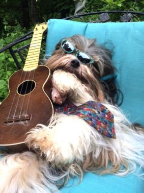 Jammin' with the Dogs @ Paw-La-Palooza