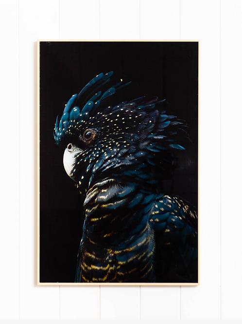 Glass Artwork - Midnight Black Cockatoo - 40cm x 60cm