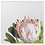 Thumbnail: Protea Print II