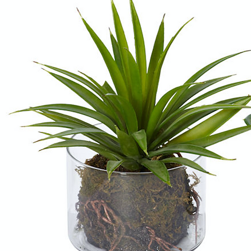 Glass Potted Succulent