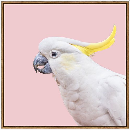 Pastle cockatoo