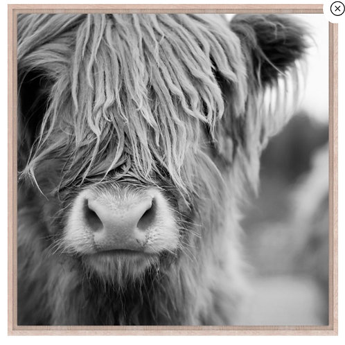 Large Monochrome Highland cow